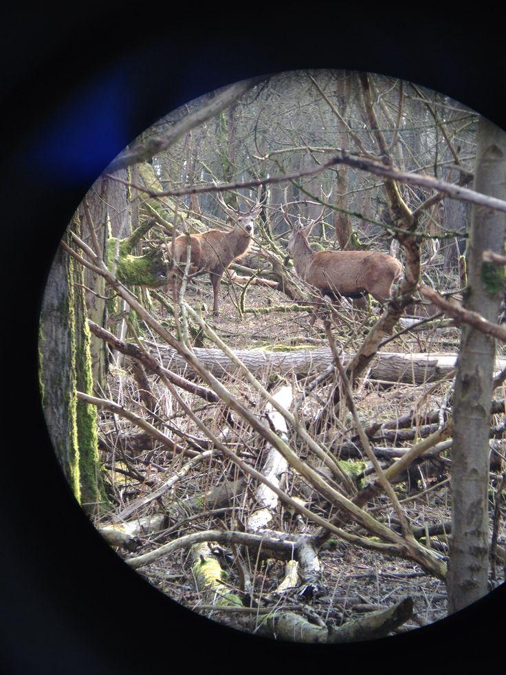 We wonen dicht bij de Oostvaardersplassen. We komen daar veel dieren tegen. Herten, wilde paarden, vossen, runderen heel veel vogels, wilde ganzen etc. Schitterend!