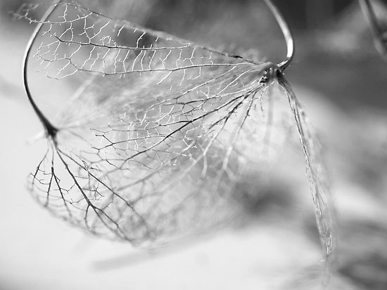 I feel so fragile today.  I am the webbed veins of a leaf and the empty chrysalis.  I am the breeze tossing about recklessly.  I am the tired snow lying quiet on the lawn.  I feel so fragile today--like everything around me is in turmoil and I'm alone, watching with sad, wide eyes.  I feel so fragile today--so, so fragile.  Like a single breath or a misplaced word could simply blow me away.