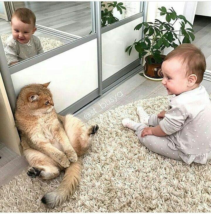 Кошки и дети картинки смешные