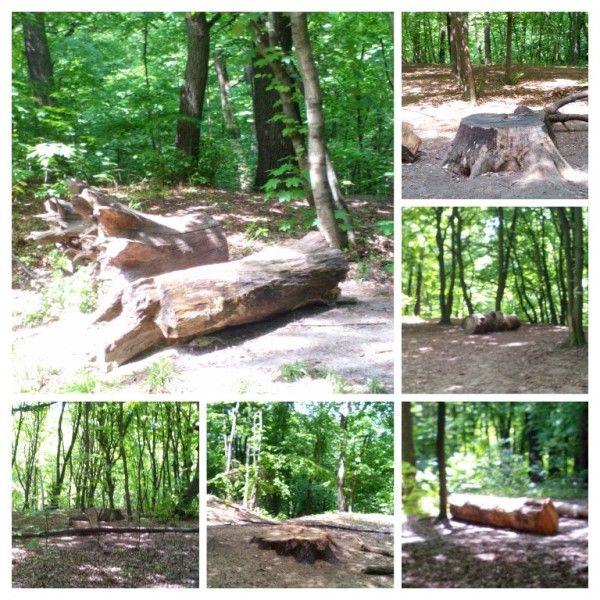 В лесу всегда найдется где присесть подумать