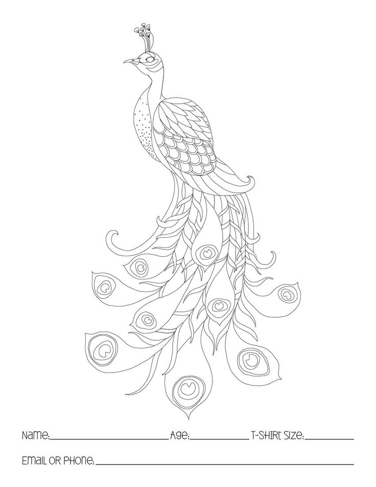 1000  images about peacock line drawings on pinterest