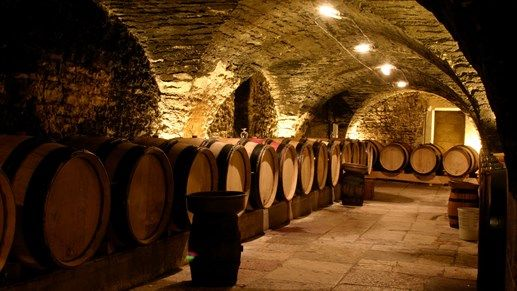 Wine barrels in wine basement - Vinstudier på Curtin University - #studies #KILROY #studyabroad