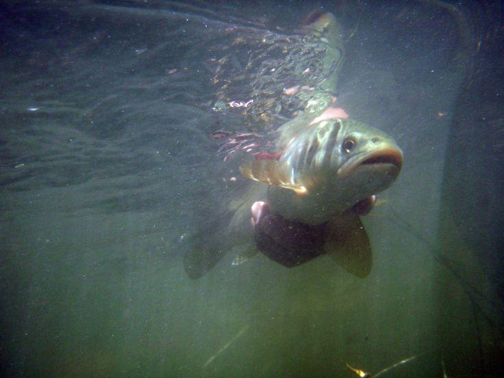 Los molinetes de la foto la pesca