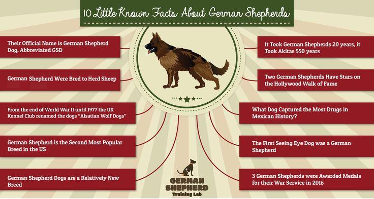 10 Little Known Facts About German Shepherds – German Shepherd Schutzhund Training