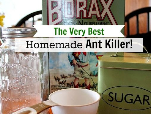 The Very Best Homemade DIY Ant Killer. 1 cup sugar, 1/2 cup water, 1 Tablespoon borax