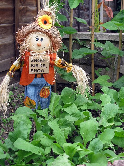vegetable patch (27/06) | Flickr - Photo Sharing!