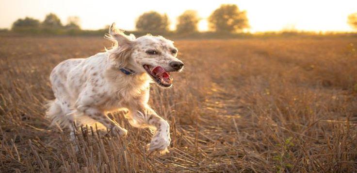 Ο μεγάλος κίνδυνος για τα σκυλιά που αγνοούμε!