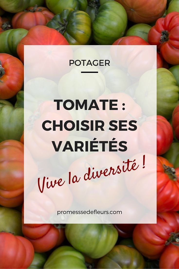 Tomates au potager : comment choisir ses variétés ? Tous nos conseils et une sélection de nos variétés préférées.