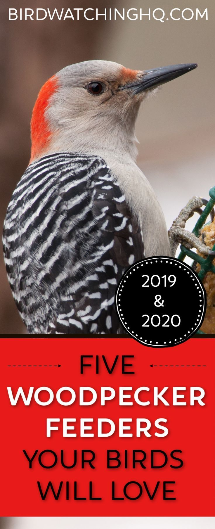 5 Woodpecker Feeders Your Birds Will LOVE (2020