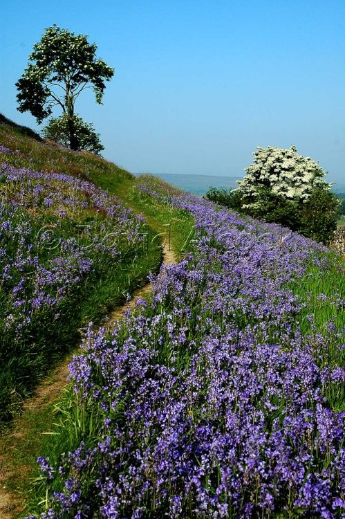 Austwick, West Riding of Yorkshire... i want to run and go to that tree and play everywhere