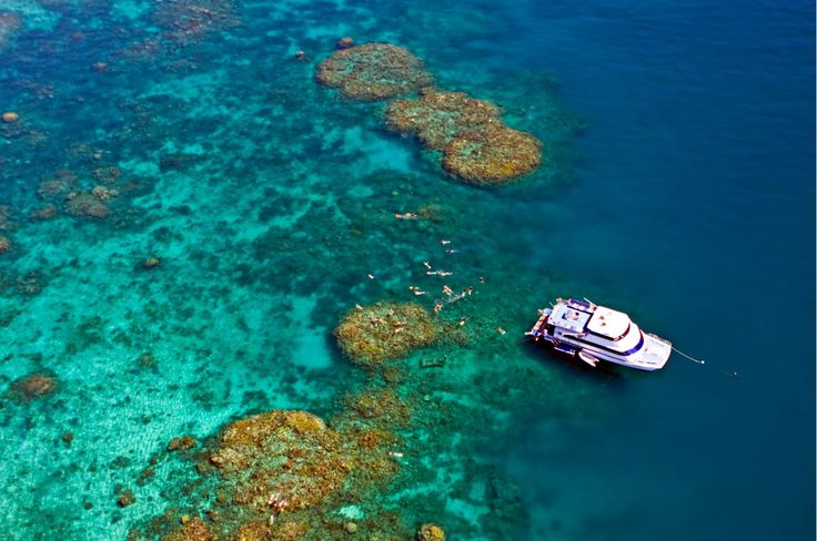 Reef Experience - Day Cruise value tour from from $195 Call Us 1300 731 620 #daycruise #reeftours #cairns #CairnsTour