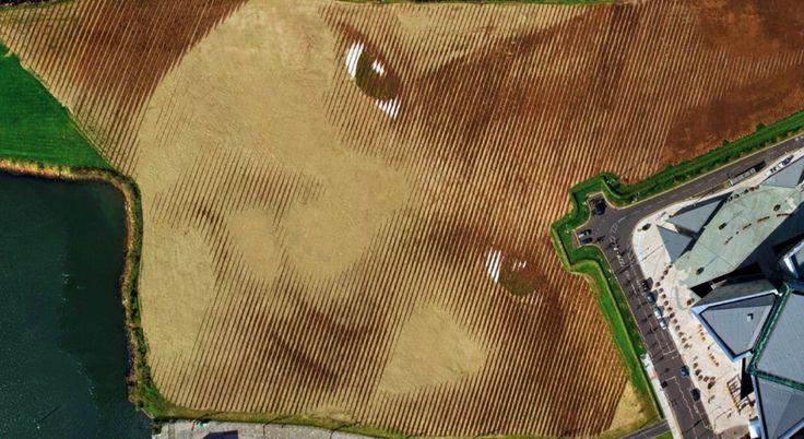 Il volto di un bimbo disegnato su un appezzamento di terra, a Belfast. Per realizzarlo ci sono voluti un terreno grande 11 acri, 30mila pali di legno, 4mila tonnellate di terriccio, sabbia, erba e pietre e il lavoro di un team di architetti. E' ''Wish'' - Desiderio - l'incredibile opera firmata dall