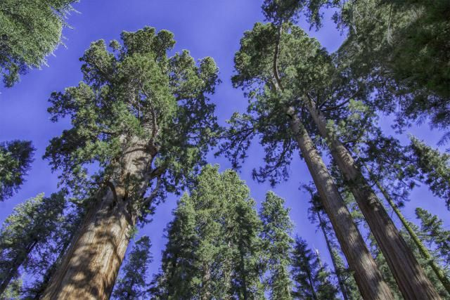 Why Sequoia National Park Is a Good Alternative to Yosemite: General Sherman Tree, Sequoia National Park