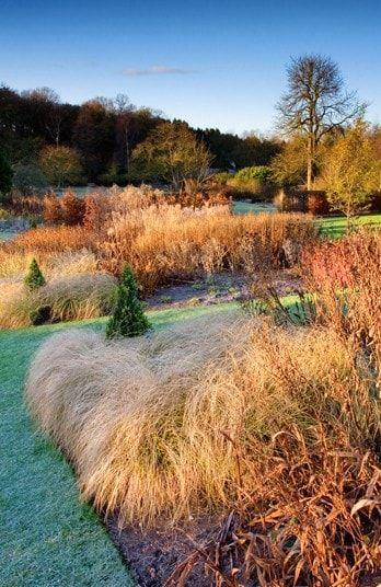 Winter grasses at RHS Garden Harlow Carr,
