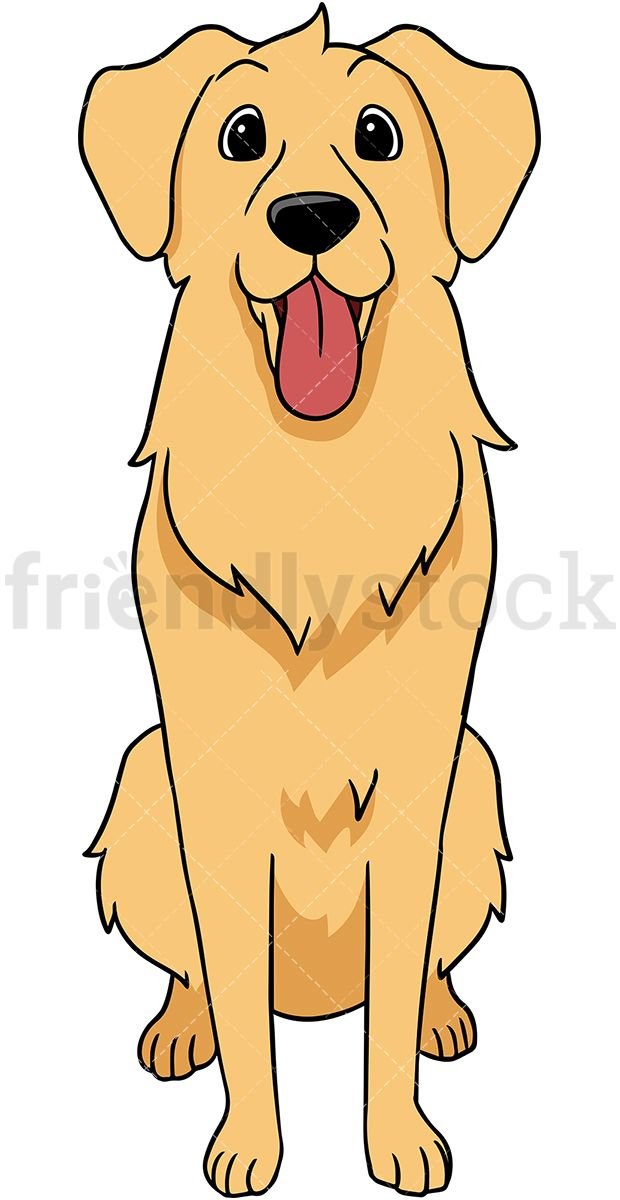 Golden Retriever Dog Standing Straight Golden Retriever Cartoon