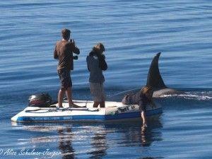 Killer whales surround 3 men on a dinghy - GrindTV.com