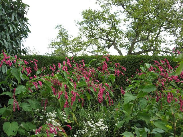 Great Dixter Garden East Sussex Engeland -Mieke Löbker  - Picasa Webalbums