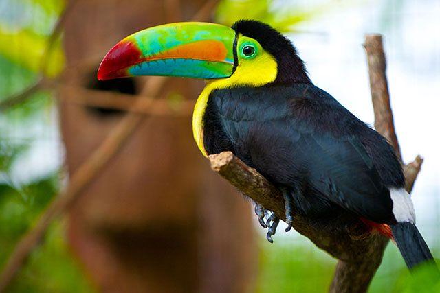 Pour préparer votre votre premier voyage au Costa Rica, découvrez notre guide express.