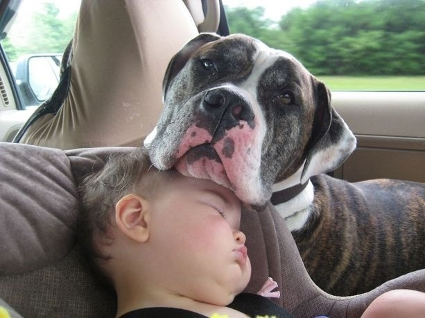 Babies and dogs pictures - Baby and dog sleeping on each other - Cute Children pictures with dogs