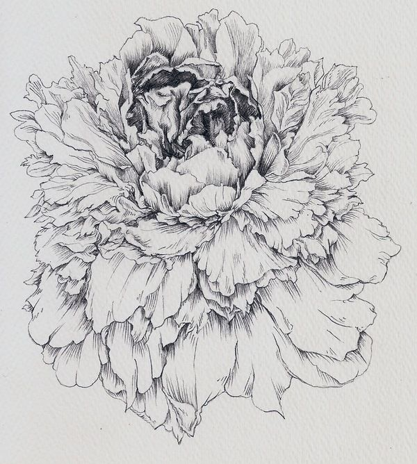 "Peonies by Susan Niezelski, via Behance  ""The fattest and most scrumptious of all flowers, 	a rare fusion of fluff and majesty, the peony is now coming into bloom."" 											- Henry Mitchell"