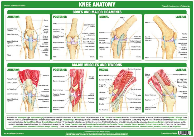 55 best Anatomy & Medical Charts & Posters images on Pinterest