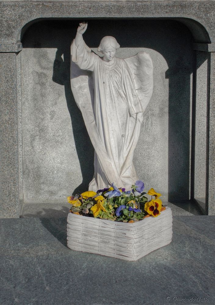 The angel and pansies by Giancarlo Gallo