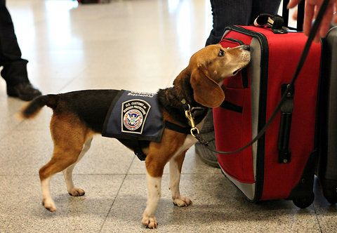 U.S. Customs and Border Protection dog named Izzy