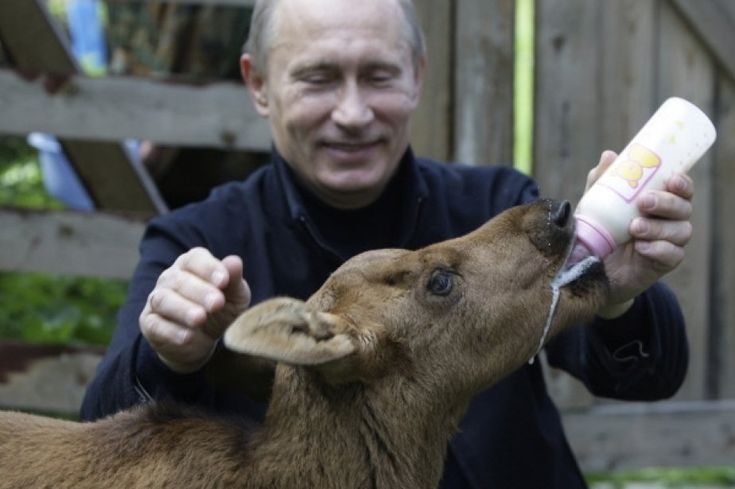 Top 10 des rencontres animalières de Poutine | Cyberpresse