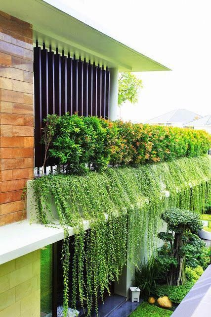 Ladder vertical garden the best DIY job for anyone with a small