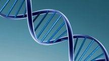 ¿Voluntad procreacional en la filiación por naturaleza en el proyecto de Código Civil?