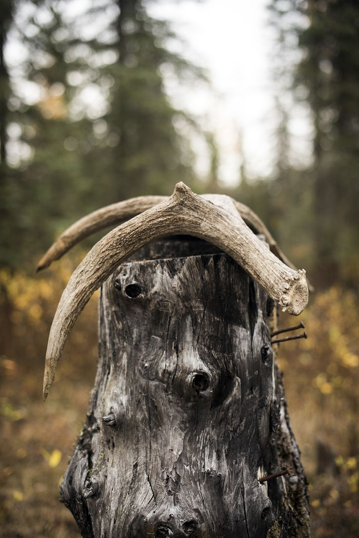 Get Outside: Shed Hunting How-To