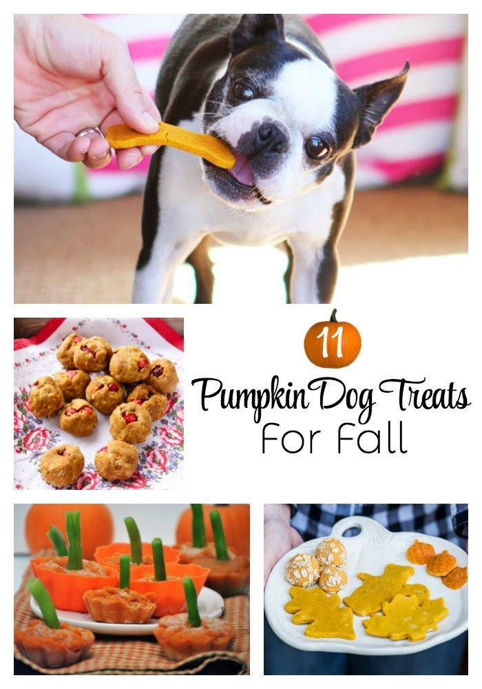 11 Pumpkin Dog Treats For Fall A Freebie For You Pumpkin Dog