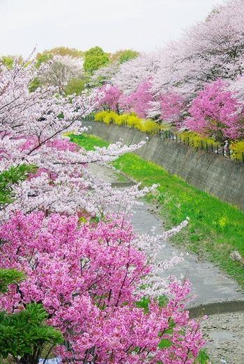 国営昭和記念公園 Showa memorial park at Tokyo  #spring #summer