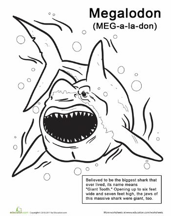 18 Best images about Shark Lapbook