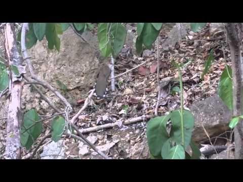 38 best ecosistemas de puerto rico images on pinterest knowledge bosque seco de guanica ecosistemas de pr fandeluxe Choice Image