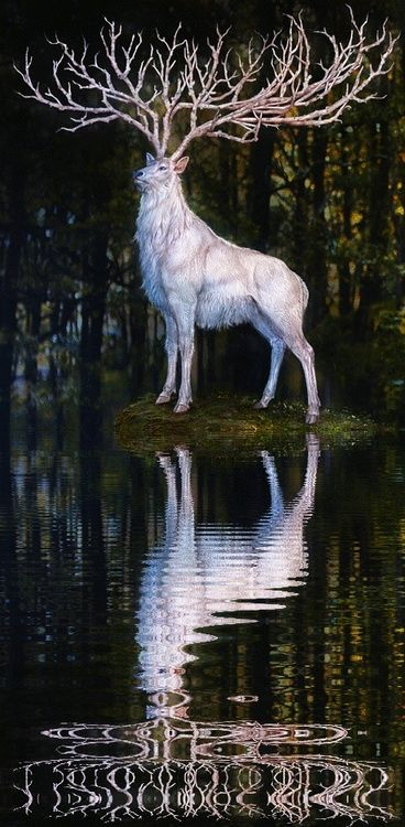 The white deer. In Norwegian folklore, it is believed that if you catch him, he will grant you one wish.
