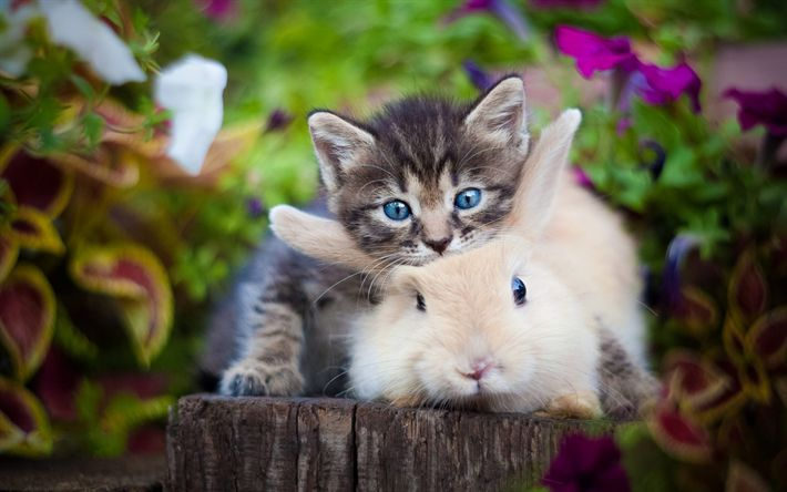 Download wallpapers small gray kitten, white furry rabbit, friendship concepts, cute animals