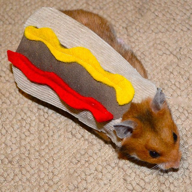 Hot Dog pet costume #hamster or guinea pig #halloween ipawz.com