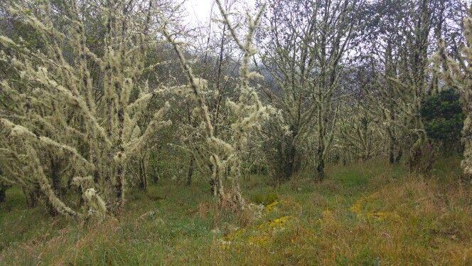 Bosque paramo de Guacheneque