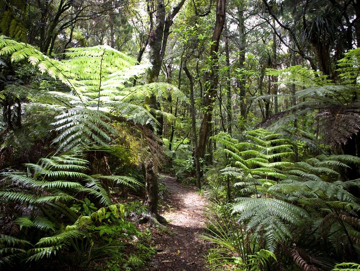 Auckland walks