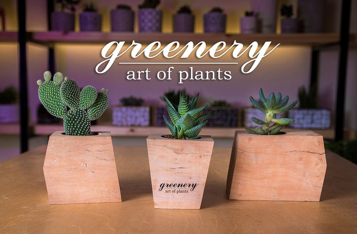 Wooden pots with succulents and cactus! #greenery #greeneryartofplants #cactus #succulents #plants #wood #chania #crete