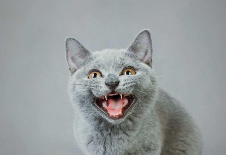 """Epic Reddit Prank """"Cat Facts"""" Is Now An App That Lets You Text Troll Your Friends 