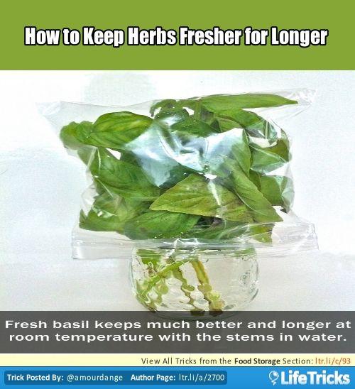 how to keep basil fresh longer