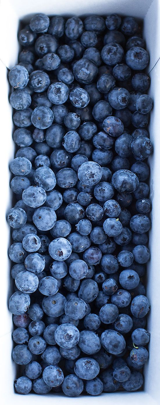 Real forest blueberries