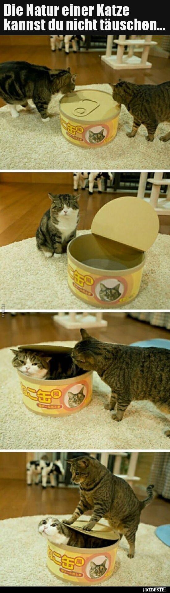 Sie können die Natur einer Katze nicht täuschen … | Lustige Bilder, Sprüche, Worte …   – Memes