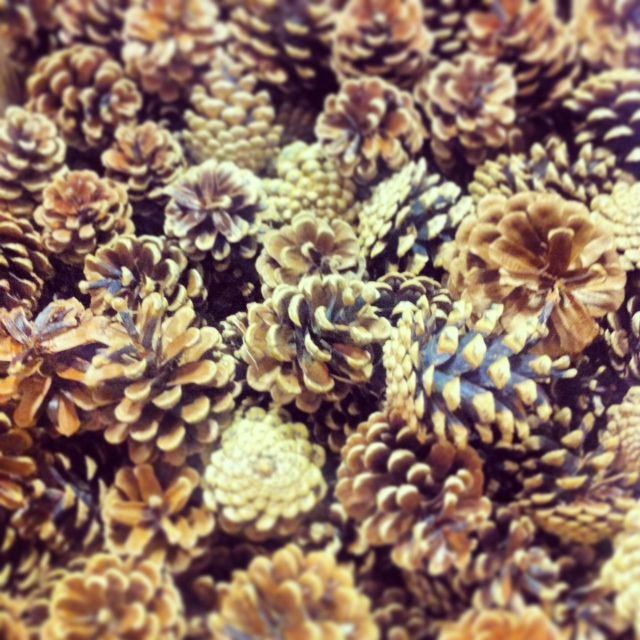 #PineCones #Cocottes www.fleurexpert.ca