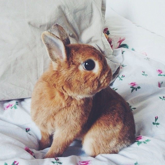 Cutest little brown bunny
