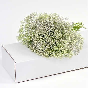 Best 25 Baby S Breath Bulk Ideas On Pinterest