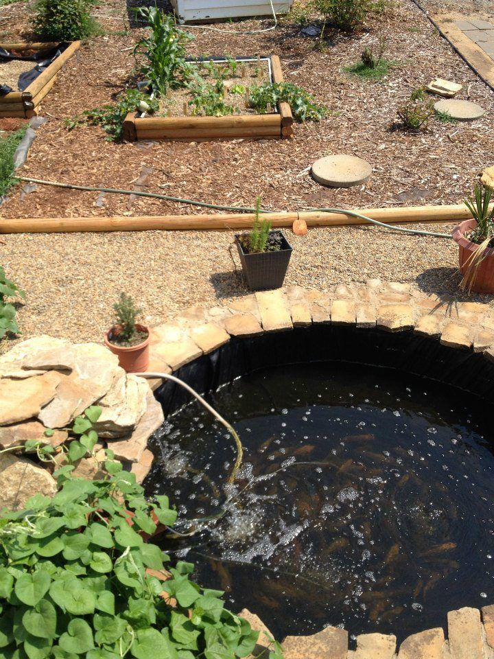 21 best images about ponds waterfalls on pinterest for Aquaponics pond design
