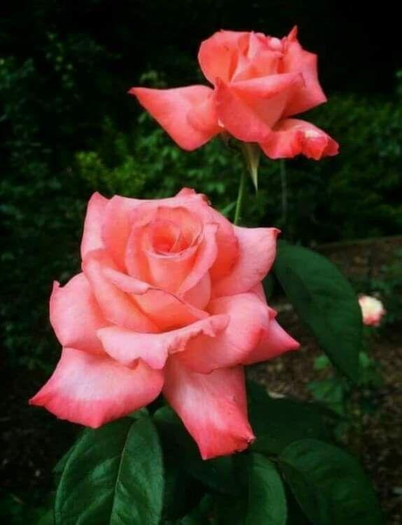 Pin Von Marietta Zimmermann Auf Blumen Bouquets Graser